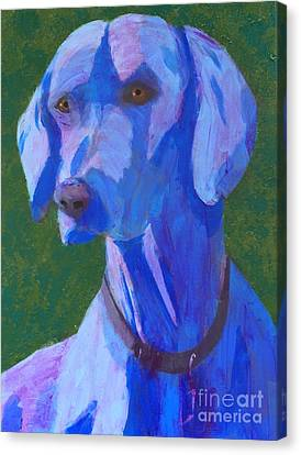 Blue Weimaraner Canvas Print