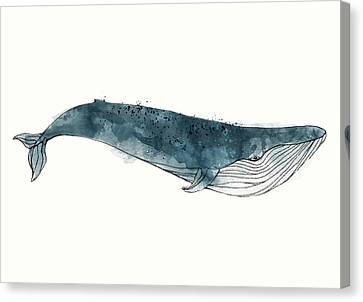 Fauna Canvas Print - Blue Whale From Whales Chart by Amy Hamilton