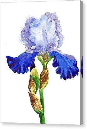 Blue White Iris Canvas Print