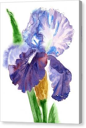 Blue White Iris Watercolor Canvas Print