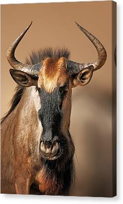 Blue Wildebeest Portrait Canvas Print