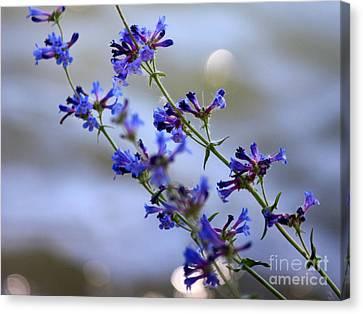 Rimrock Canvas Print - Blue Wildflowers Over Rimrock Lake by Carol Groenen