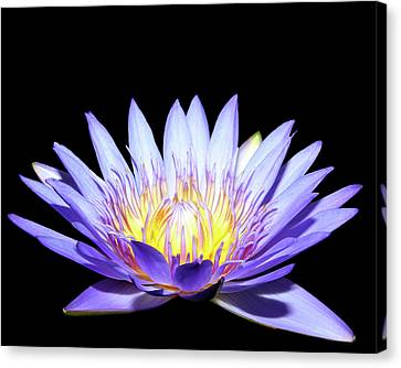 Canvas Print featuring the photograph Blue Wonder by Judy Vincent