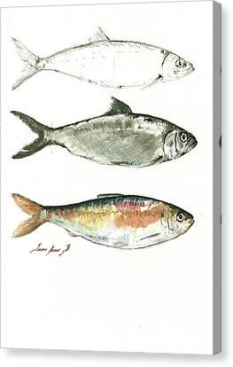 Herring Canvas Print - Blueback Herrings by Juan Bosco