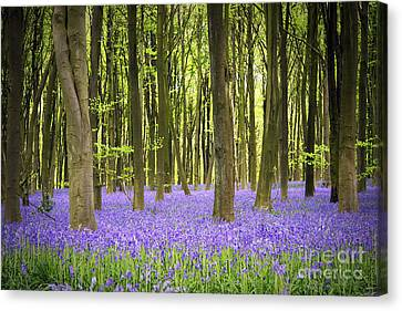 Bluebell Carpet Canvas Print