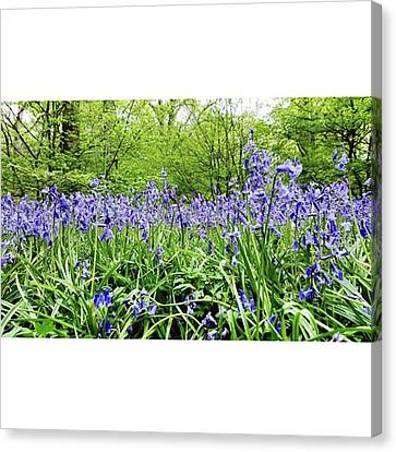 #bluebell #flowers #spring  #woodland Canvas Print by Natalie Anne