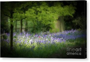 Bluebell Forest Canvas Print by Amanda Elwell