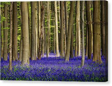 Forest Floor Canvas Print - Bluebell Forest by Studio Yuki