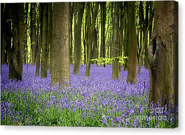Bluebells Canvas Print by Jane Rix