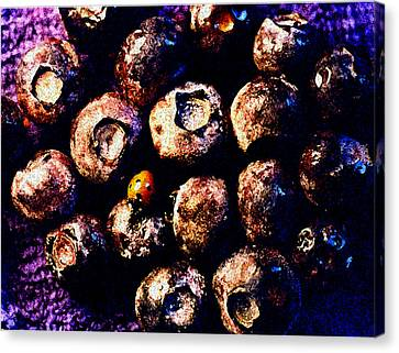 Blueberries And Ladybug Canvas Print by Nancy Mueller