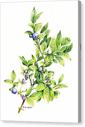 Blueberry Branch Canvas Print by Betsy Gray
