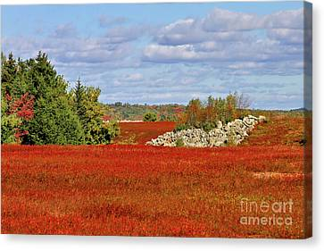 Canvas Print featuring the photograph Blueberry Field by Debbie Stahre