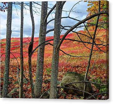 Blueberry Field Through The Wall - Cropped Canvas Print