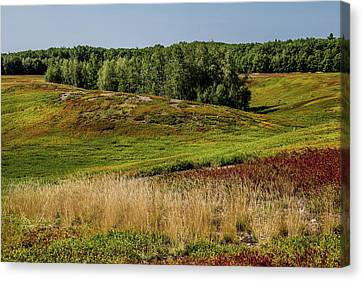 Blueberry Fields Forever Canvas Print by Brent L Ander