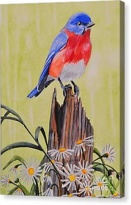 Bluebird And Daisies Canvas Print