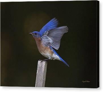 Bluebird  Canvas Print by Angel Cher
