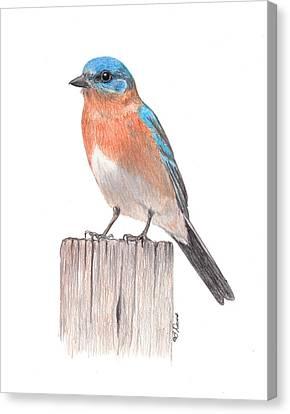 Bluebird On Post Canvas Print by Betsy Davis