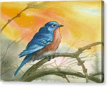 Bluebird Canvas Print by Sean Seal