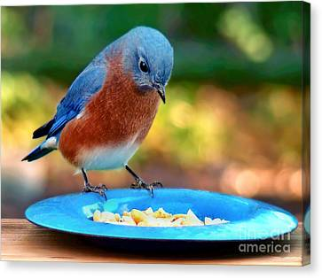 Canvas Print featuring the photograph Bluebird's Dinner by Sue Melvin