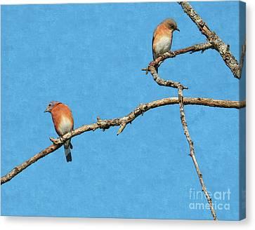 Bluebirds On A Crazy Limb Canvas Print
