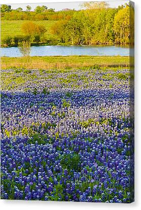 Bluebonnet Field Canvas Print by Debbie Karnes