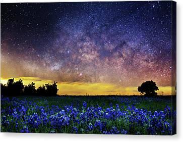 Bluebonnet Heaven Canvas Print by Matt Smith