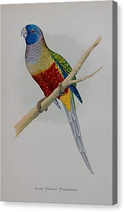 Bluebonnet Parrot - 1884 Canvas Print