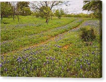 Bluebonnet Road - Texas Hill Country Canvas Print by Brian Harig