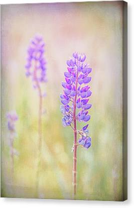 Canvas Print featuring the photograph Bluebonnet by Russell Styles