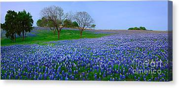 Bluebonnet Vista - Texas Bluebonnet Wildflowers Landscape Flowers  Canvas Print by Jon Holiday