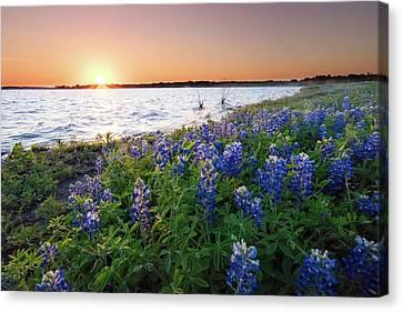 Bluebonnets Along A Shore Before The Sunset - Texas Canvas Print