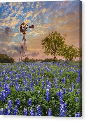 Bluebonnets Beneath A Windmill 2 Canvas Print
