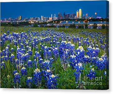 Bluebonnets In Dallas Canvas Print by Inge Johnsson