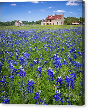 Bluebonnets In Marble Falls Canvas Print by Inge Johnsson