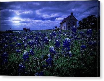 Canvas Print featuring the photograph Bluebonnets In The Blue Hour by Linda Unger