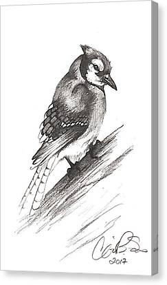 Bluejay Canvas Print - Bluejay by Corinne States