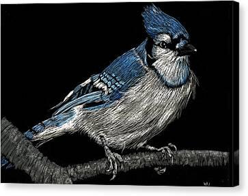 Bluejay Canvas Print - Bluejay by William Underwood