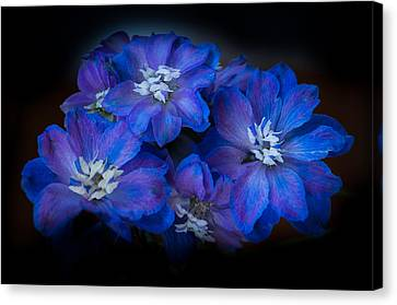 Blues Canvas Print