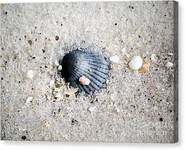 Bluish Purple Ribbed Sea Shell Macro Buried In Fine Wet Sand Watercolor Digital Art Canvas Print by Shawn O'Brien