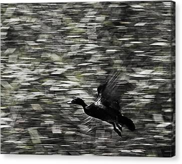 Canvas Print featuring the photograph Blurry Bird by Ron Dubin