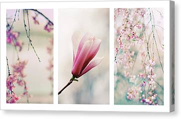 Canvas Print featuring the photograph Blush Blossom Triptych by Jessica Jenney