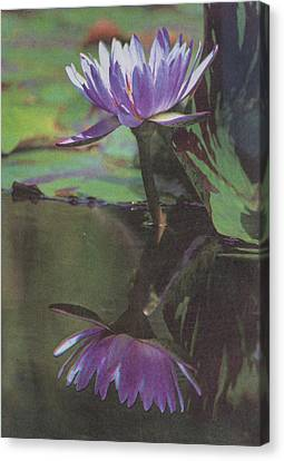 Blush Of Purple Canvas Print