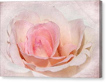 Blush Pink Dewy Rose Canvas Print