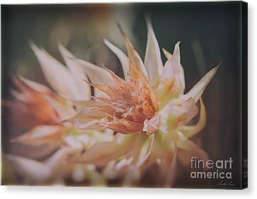 Canvas Print featuring the photograph Blushing Bride by Linda Lees