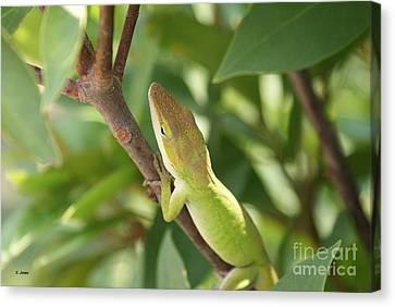 Blusing Lizard Canvas Print