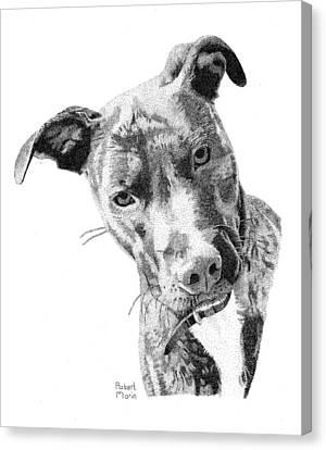 Bo Canvas Print
