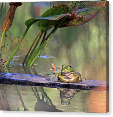 Canon 7d Canvas Print - Boardwalk by Donna Kennedy
