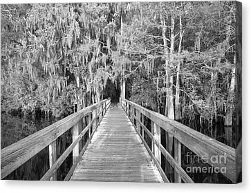 Boardwalk Into The Cypress In Black And White Canvas Print