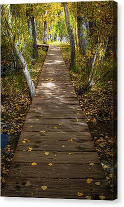 Boardwalk Over Convict Creek Canvas Print