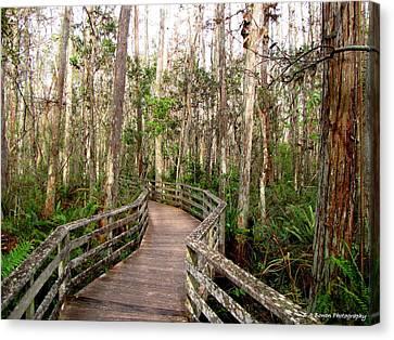 Boardwalk Through Corkscrew Swamp Canvas Print by Barbara Bowen